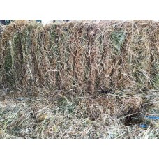 PASTURE HAY SQUARE BALE ***NEW SEASONS***